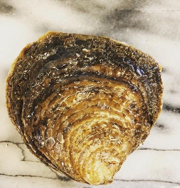 huitre-plate-ostrenn