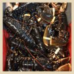 Crustacés_HOMARD_ fd beige