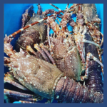 Crustacés_LANGOUSTE_ fd bleu