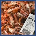 Crustacés_LANGOUSTINES_ fd bleu