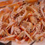 Langoustines crustacés Bretagne